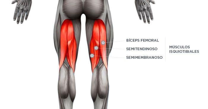 musculo biceps femoral