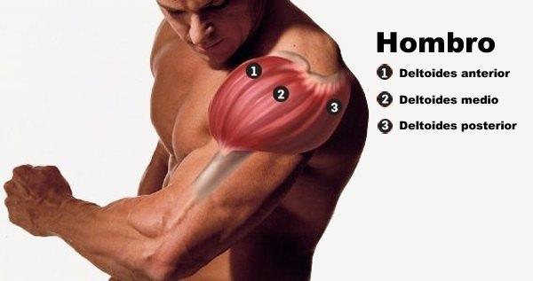 musculo deltoides anterior