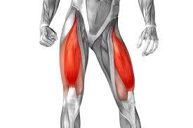 musculos cuádriceps