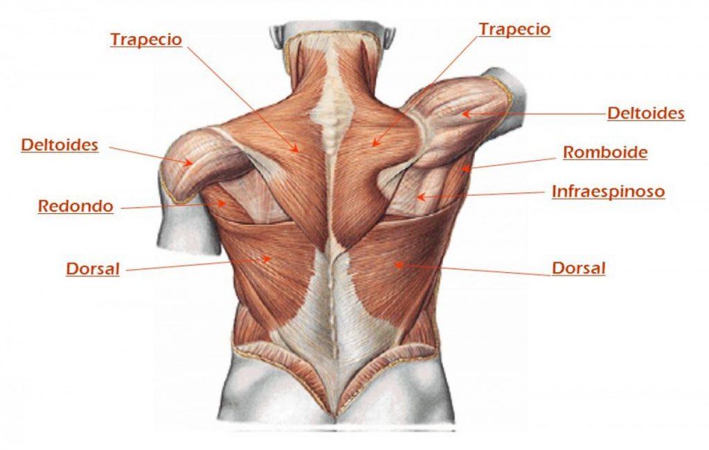 mis mejores consejos para aumentar la espalda