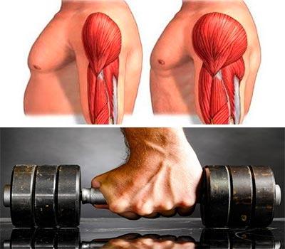 arriba una imagen de un biceps hipertrofiado y abajo una mano agarrando mancuerna